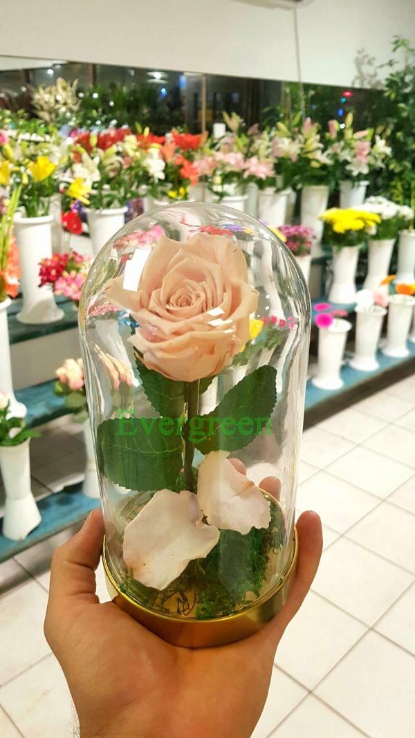 Večna ruža 2