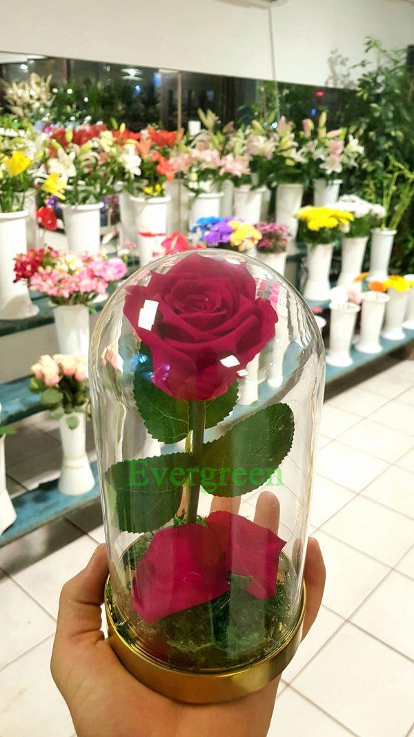 Večna ruža 3