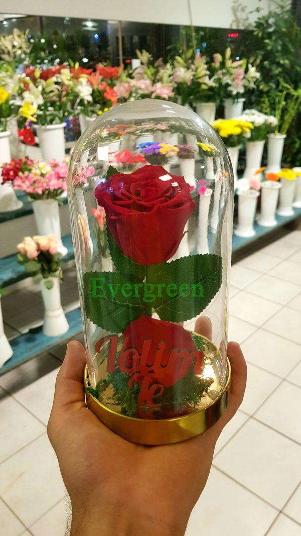 Večna ruža 5