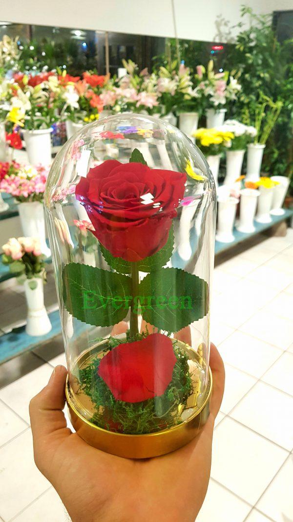 Večna ruža 6