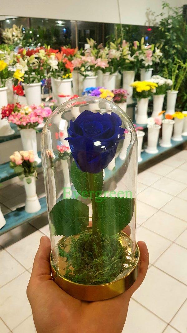 Večna ruža 8