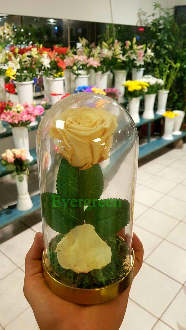 Večna ruža 9